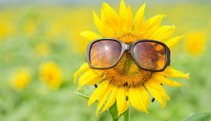sunflower glasses esg